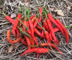 Select the best chilies for drying.