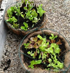 Plant with a mixture  of seedlings and seeds.
