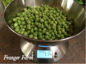 Peas ready for blanching.