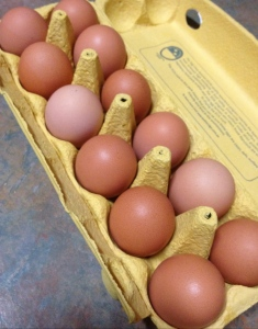 Eggs! The best reason to keep chickens.