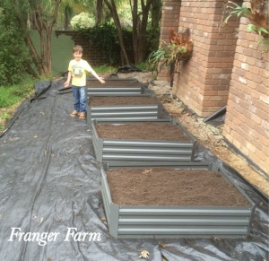 Adding some more raised beds at the back of the house.