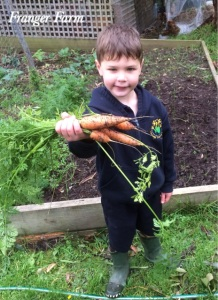 carrots don't mind reduced sun hours.