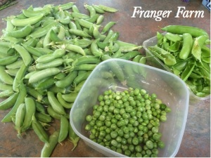 peas and beans will grow in partial shade.