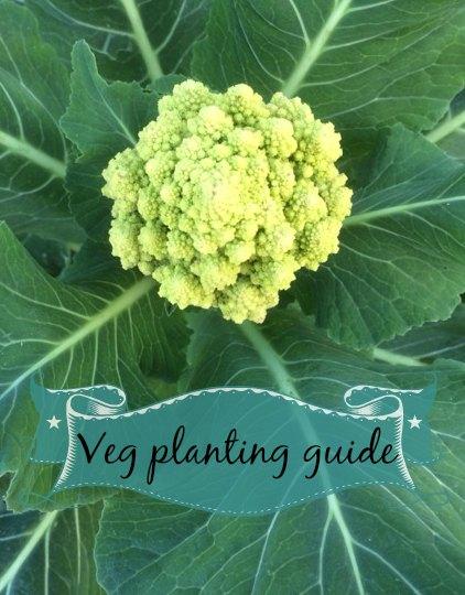 veg planting guide